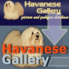 Havanezer database